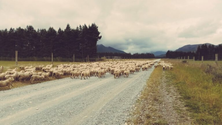 New Zealand 2019/20 Stage 10 – Queenstown to Manapouri